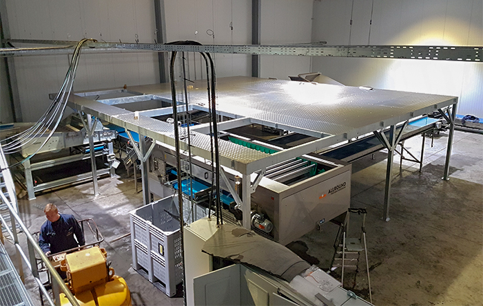 Platforms for vegetable processing